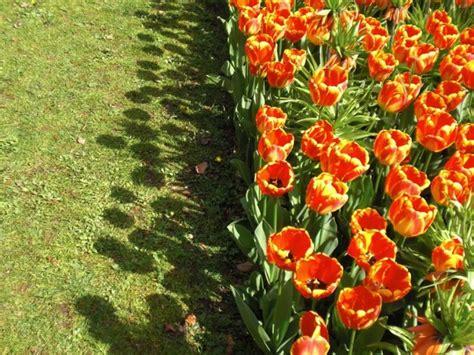 piante e fiori on line fiori e piante on line best images about piante e fiori