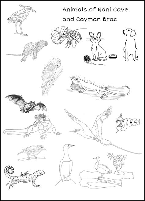 animals  nani cave  cayman brac coloring pages grades