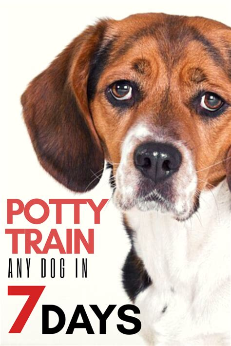 how to potty a in 7 days potty your in 7 days or less doggies