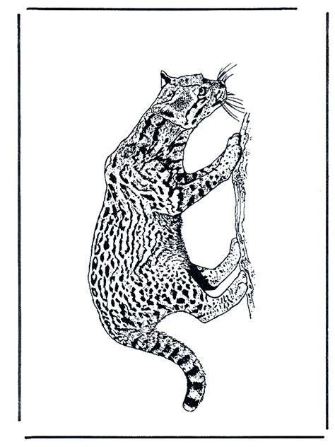 pantera felini