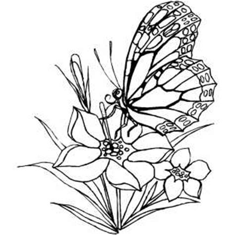 free coloring pictures of flowers and butterflies flower and butterfly coloring sheet
