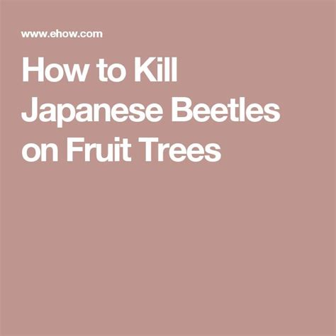 25 best ideas about killing japanese beetles on pinterest japanese beetles insect repellent