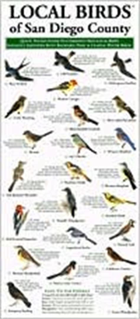 local birds of san diego county pocket size quick guide