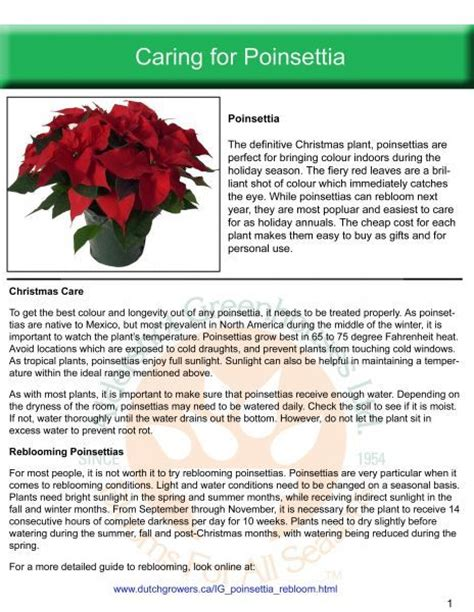 aldershot greenhouses ltd caring for poinsettia