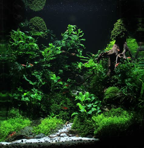 Planted Aquarium Aquascaping by Aquariums Planted Tanks On Aquascaping