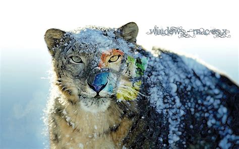 wallpaper mac leopard hd snow leopard backgrounds wallpaper cave