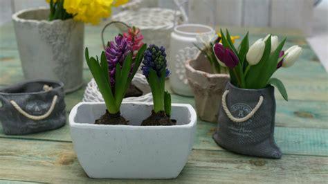 vasi per bulbi dalani fioriere in cemento eleganti e versatili