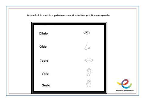 imagenes infantiles sobre los sentidos aprendiendo los cinco sentidos del cuerpo humano