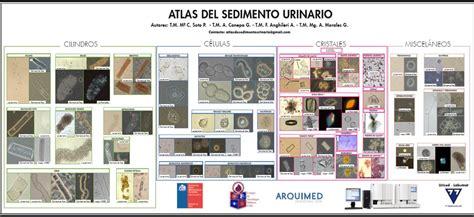 analisi sedimento urinario atlas de sedimento urinario pdf free bonus