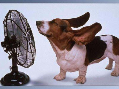 too hot funny pic the funny pics funny pictures its too hot here funny