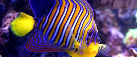 ion color brilliance brights mixed with developer colorful saltwater fish the gallery for gt colorful fish