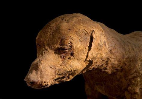 ancient dogs mummified ancient photo 37472340 fanpop