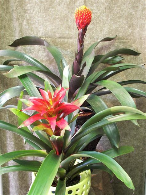 what are tropical plants just in tropical plants floral studio