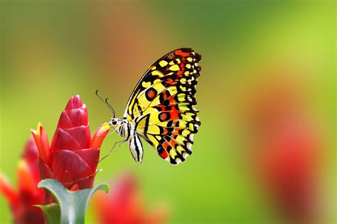Nice Butterfly on Flower HD Wallpaper   HD Wallpapers