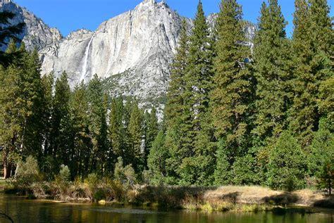 sierra nevada  montane forest wikipedia