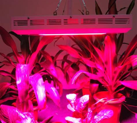 led grow lights for orchids grow lights for orchids on winlights com deluxe interior