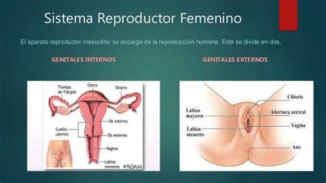 aparato reproductor masculino youtube sistema reproductor femenino y masculino imagenes de
