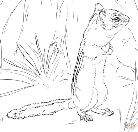 realistic squirrel coloring page realistic squirrel coloring pages