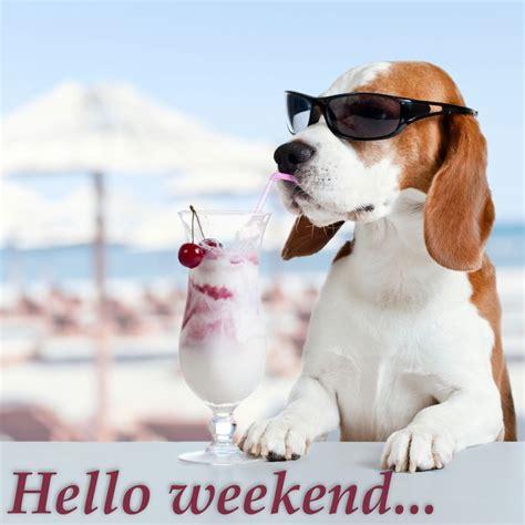 cherry hello weekend shades summer picturescafe