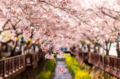 aaron choi spring flower  topaz spring  korea