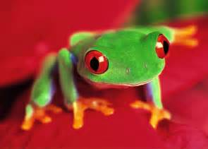 colored frogs wallpapers box colored frog high definition wallpapers