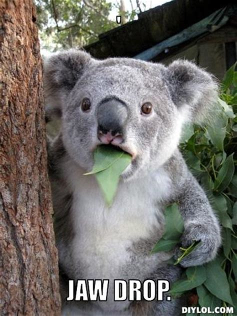 Meme Generator Koala - there is a reason i m not the one in broadcast wife of a