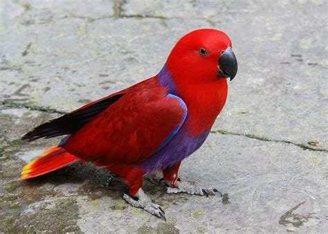 world beautiful birds world beautiful parrots facts