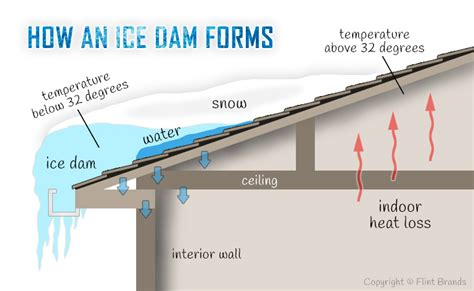 How To Prevent Roof Dams Mold Damage Mold Caused By Dams Mold Pros
