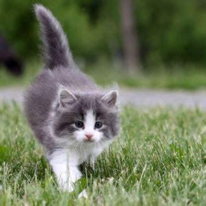 Sho Kucing Putih jom cari v 488 selesai teka teki quot trivia quot lawak