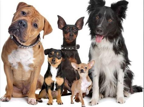 The Same From The Adoptable Pets Photo Pool by Sabe Tudo Sobre As Ra 231 As De Cachorro Parte 2 Quizur