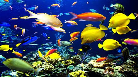 imagenes 4k en movimiento wallpapers peces hd en movimiento fotos db 1920x1080
