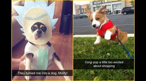 hilarious dog snapchats   impawsible