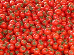 how to grow organic tomatoes top 10 tips tiny house blog