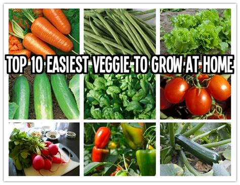 vegetable gardening how to grow vegetables the easy way books top 10 easiest vegetables to grow at home how to