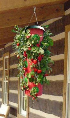 topsy turvy strawberry planter 1000 ideas about strawberry pots on
