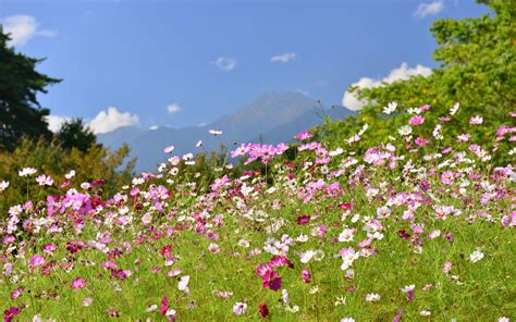 wildflowers that bloom in the fall in photos the fall wildflower bloom travel leisure