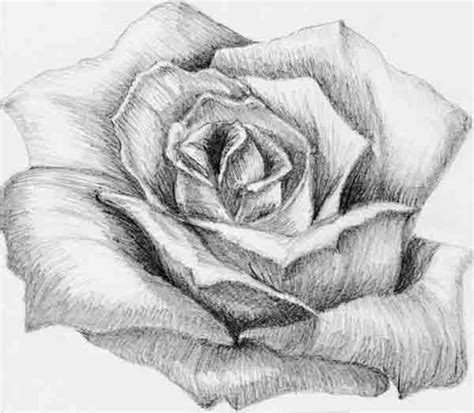 imagenes de rosas en 3d a lapiz dibujos a l 225 piz de flores dibujos a lapiz