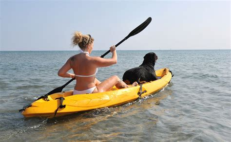 best kayak for dogs pet travel tips for holidaying with your pet