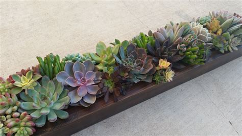 Succulent Planter Box 24 Succulent Planter Box