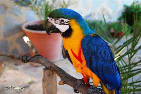 imagenes animales con plumas animales con plumas imagenes imagui