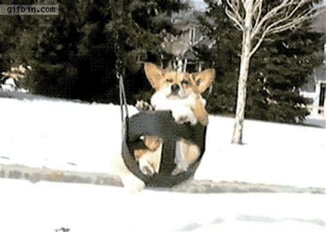 swing gif corgi on a swing best gifs updated daily