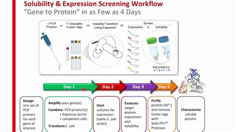 protein expression increase your probability of success with faster easier