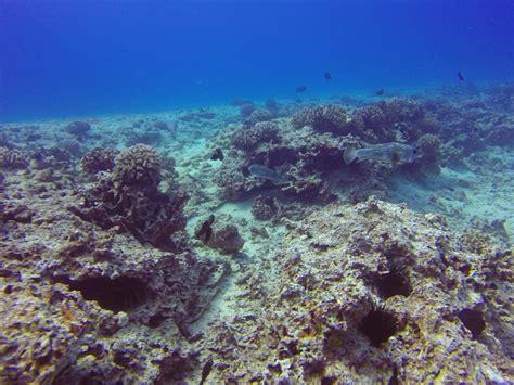 best dive spots 4 best scuba diving spots in oahu hawaii island divers