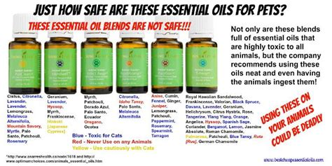 Essential Oils Toxic To Cats   2018 Funny Cats