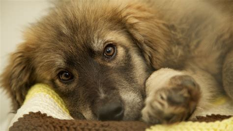 craigslist puppy scams a warning for consumers about an scam involving puppies news 1130