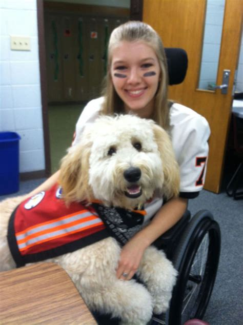 trained psychiatric service dogs for sale organization trains service dogs human companions courierlifenews