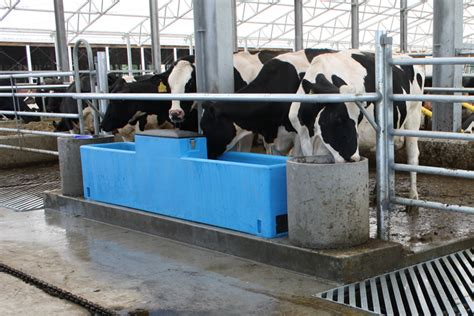 Valley Comfort Systems Dairy Cow Feed And Water Troughs Canada Mid Valley Mfg