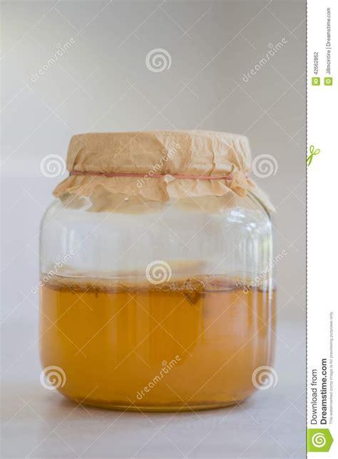 Fermented Kombucha Tea Stock Photo - Image: 42662862 Healthy Kombucha Scoby