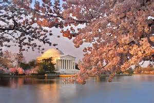 cherry blossom festival dc the best places to see cherry blossoms