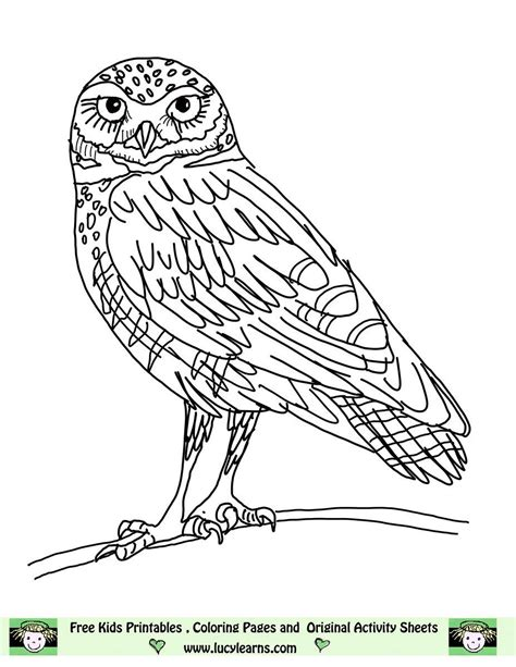 pictures of owls to color owl coloring pages free printables owl coloring pages